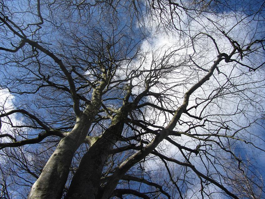 Trees & Skyline